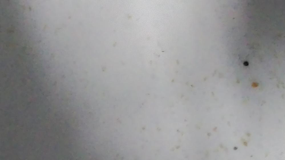 この小さい白いいっぱいいるのなんですかね?(画像荒くてすいません)田んぼで取ってきました。光に集まってきたやつです。