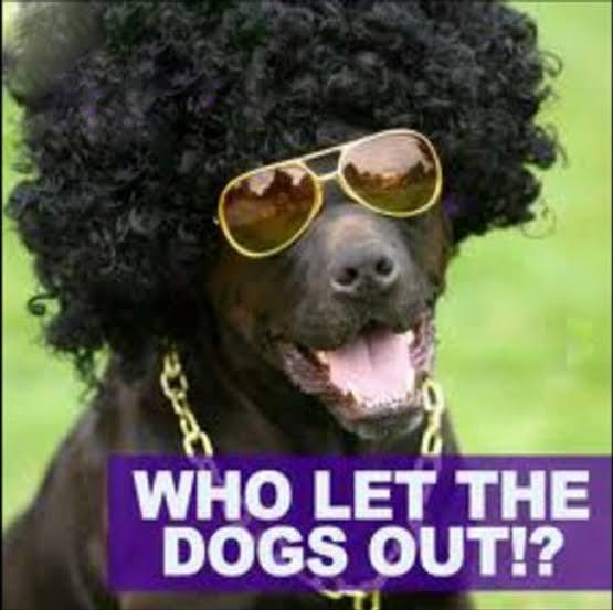 洋楽のMVで「犬」が出てくるものと言えば? ※曲は犬と関係なくても大丈夫です。
