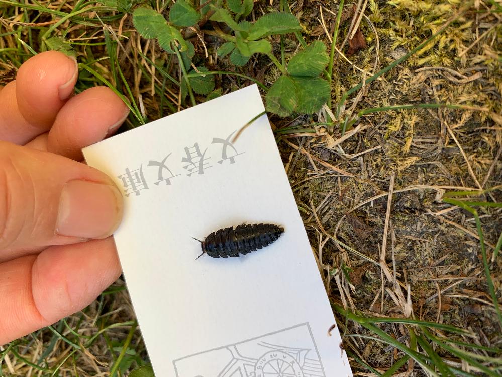 この虫の名前わかる方いましたら、教えて頂きたいです。 足は左右3本づつでしたので、ワラジ虫やダンゴムシではないようです。 北海道のキャンプ場で見ました。