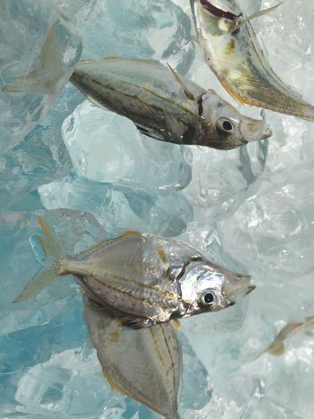 教えてください この魚は、何ですか? どう調理したら美味しいですか?