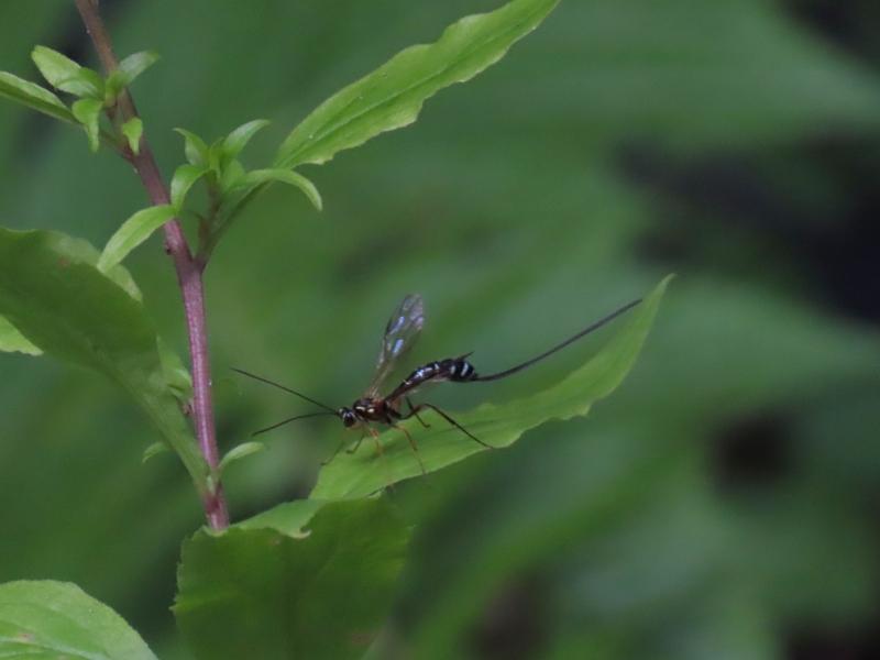 この昆虫は何というのでしょうか?