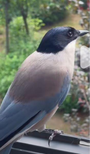 この鳥の名前は何ですか?