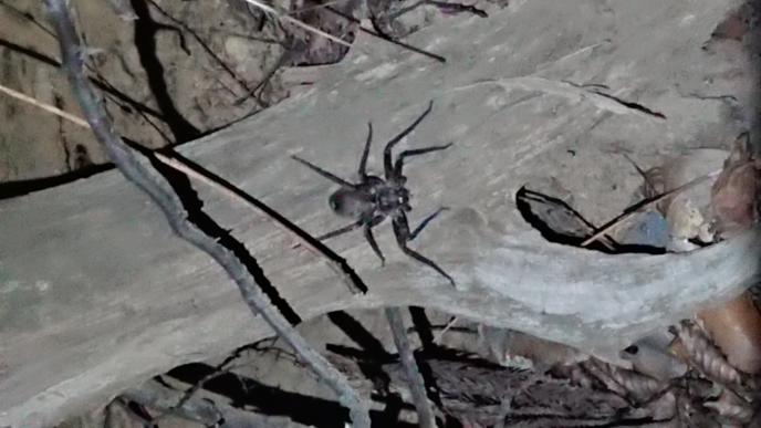 これ 何クモですかね?