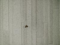 家の外壁にたくさん付いている蛾が大量発生していて困っています (ToT) 種類と原因、駆除方法を教えてください!