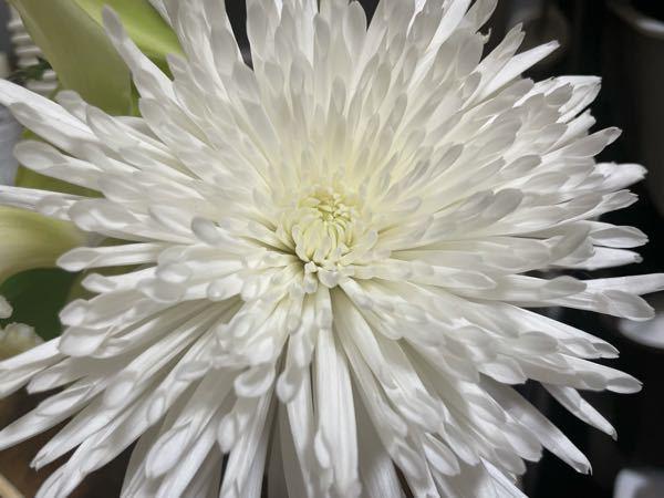 このお花の名前をご存知の方いらっしゃいますか? 色んなワードで検索してみましたが分からず、、 よろしくお願い致します。