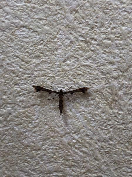 この虫の名前知ってる人〜 教えてください!