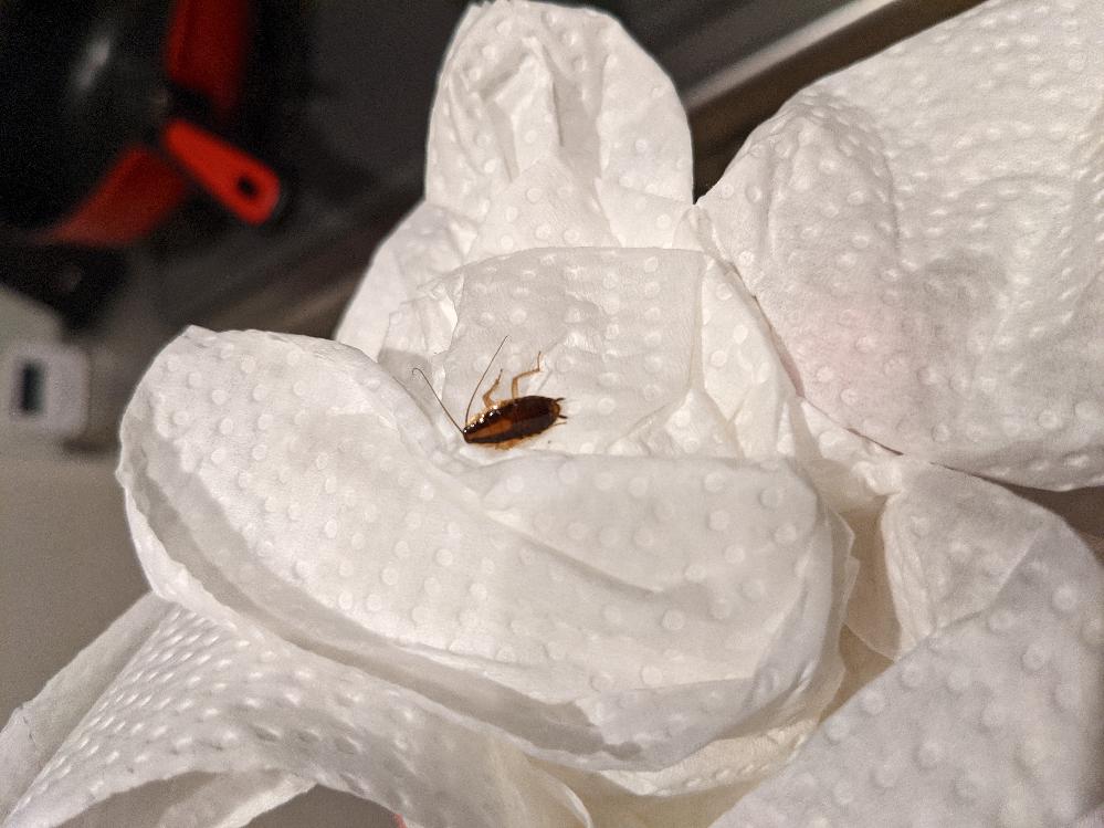 この虫はなんでしょうか? キッチン収納の下から出てきました。
