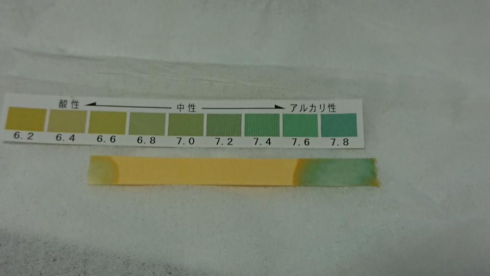 初歩的な質問で申し訳ないですが自信が無いので見ていただきたいのですが…、熱帯魚の水槽用に GEX のテストペーパー を購入しました 。 モニターにより 色の見え方が違うのは承知していますが 添付してる テストペーパーの 右側の色は アルカリ性ですよね?? ( 左側の変色は水道水です こちらのほうが中性に近いですか??) この状況だと 例えば エンゼルフィッシュ や ネオンテトラ は しんどいですか?