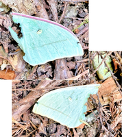 蝶の羽が落ちていました。  持ち主の名前を教えてください。