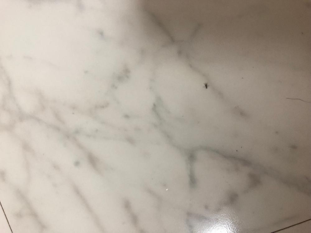台所の壁や冷蔵庫の下(床)をよく歩いているこの虫はなんでしょうか。画質が悪く恐縮ですがご教示いただきたく。 最近ゴキブリを(初めて)見かけたので、少し不安です。
