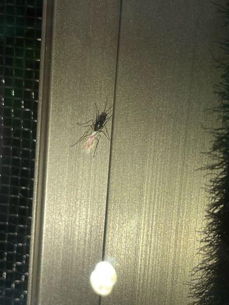 この虫何かわかる方いらっしゃいますか? ここ最近網戸に多く発生します。 窓を締切っていますが、部屋の中に入ってきます。 羽アリなどでは無いですよね。対策など教えて下さると幸いです。