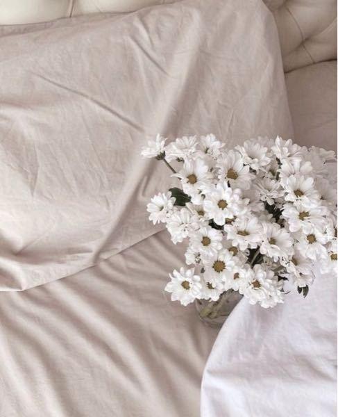 このお花はなんという種類のお花ですか? 回答いただけると幸いです。