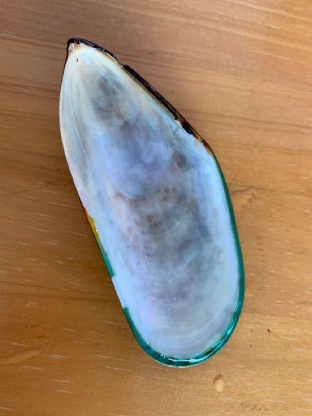 グッピーの水槽に、貝殻を入れると、グッピーが栄養を摂れて良いとききました。レストランで出たムール貝の貝殻を良く洗って入れてあげても大丈夫でしょうか?
