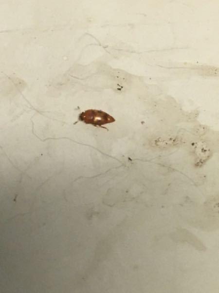 この虫は何ですか? 5ミリほどです。