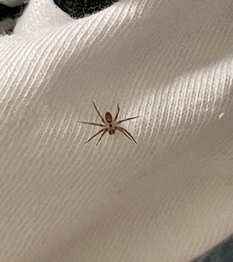 ※クモ画像注意※ この蜘蛛はなんという種類ですか? また、成長して大きくなったりしますか?