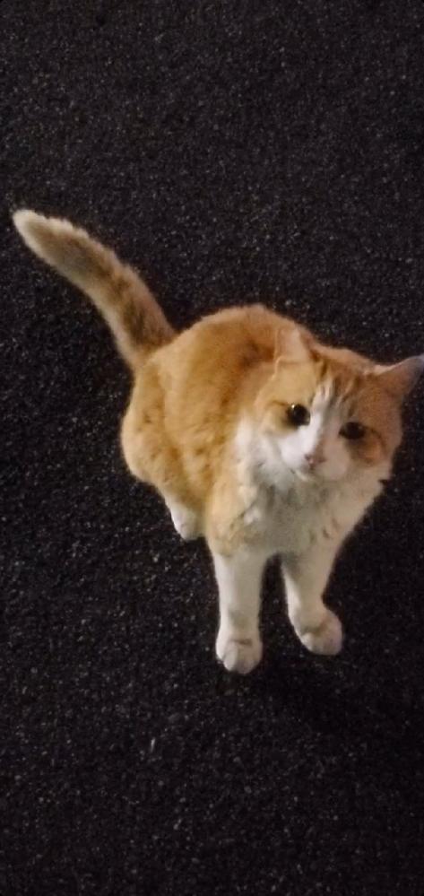 野良猫だと思うのですが、とても可愛いので品種なのではと思ったのですが、わかるかたいますか?