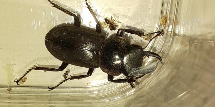 玄関の前にいたのですが、なんという種類の虫でしょうか?