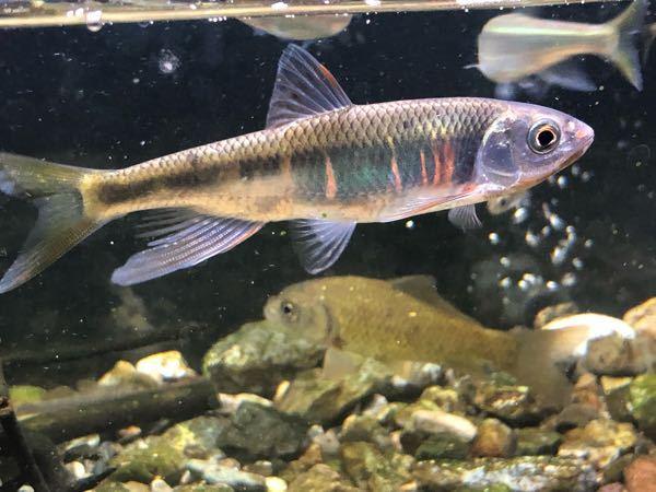 この魚種を教えてください