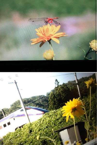 この花の名前教えてください。 標高400m程度の山間部。 何箇所か咲いてましたが、ほとんどが群生でした。 キク科の植物だろう、とは思ったのですが、知識が乏しすぎて全く絞れませんでした。 よろしくお願いします。