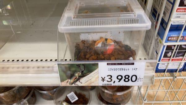 ニジイロクワガタのペアで4000¥は 高いのでしょうか。 カインズです。