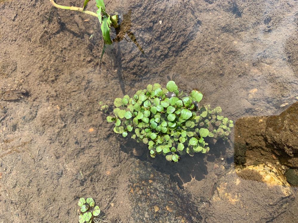 この植物の名前を教えて頂きたいです。 よろしくお願い致します。
