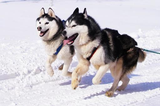 昔、「犬ぞり」とか、「綱引き」とかあったのに。 何でオリンピックの競技から外されちゃったのかな? 犬ぞりとか、面白そうですよね???