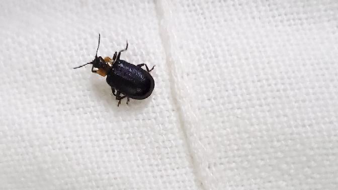 これは何て言う虫ですか?