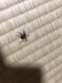 この蜘蛛の名前を教えてください!! 軍曹ですか!?