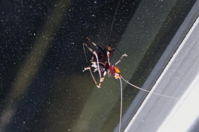 この虫はなんと言う虫か教えて下さい。