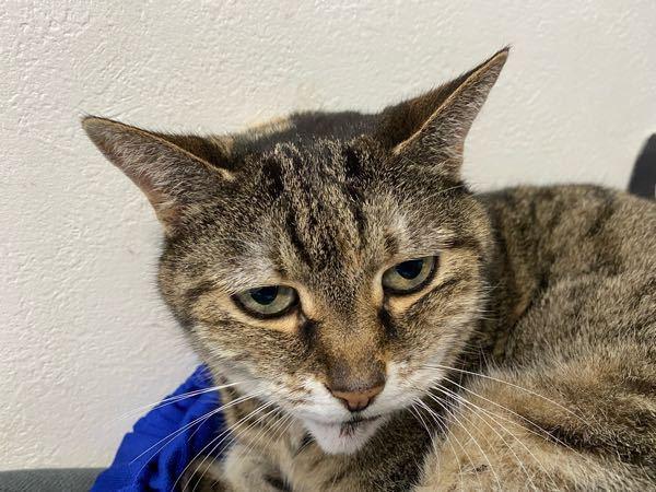 猫のこの表情はどんな意味ですか?