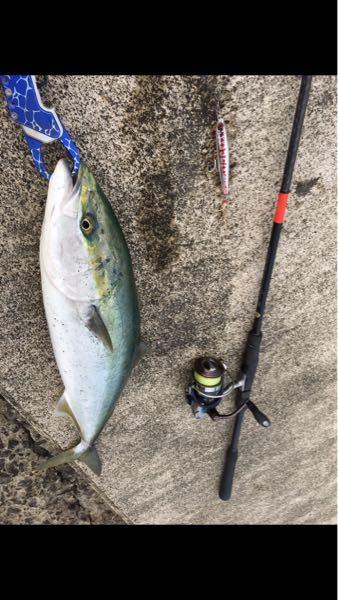 ヒラマサ??ワラサ?? 数年前に釣った魚の写真を見ていて、気になったので教えてください。画像の魚はヒラマサでしょうか?それともワラサ?サイズは65cmくらいだったと思います。