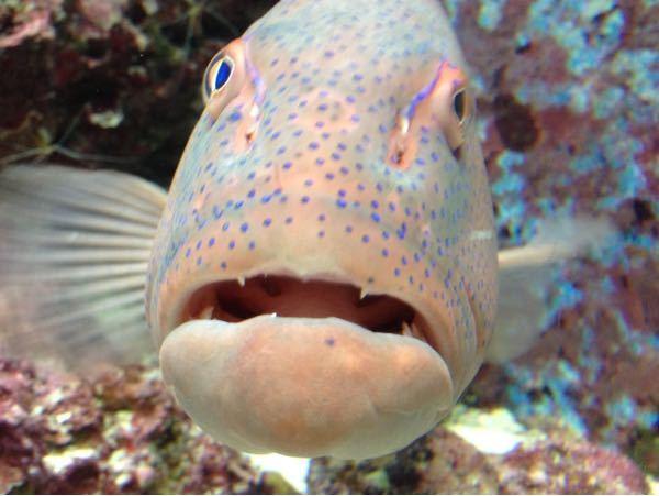 この魚の名前を教えてください。 ちなみに美ら海水族館で撮りました。