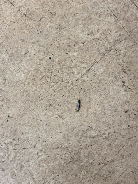 この虫はなにかわかりますか?