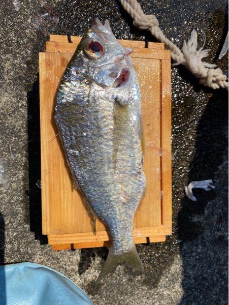 この魚なんていう奴ですか?刺身でもいけそうですか?