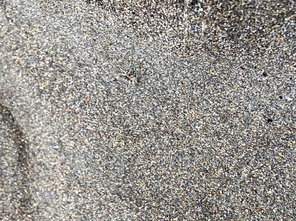 砂浜にいた生物です、体調1センチ弱くらいです。何でしょう?虫でしょうか、それとも海老の仲間でしょうか?