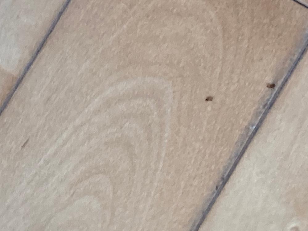 家の隙間からこんな小さい蟻?が出入りしています。 全長2ミリ程度です。これはシロアリですか?なにか対策やオススメの駆除剤があったら教えてください。