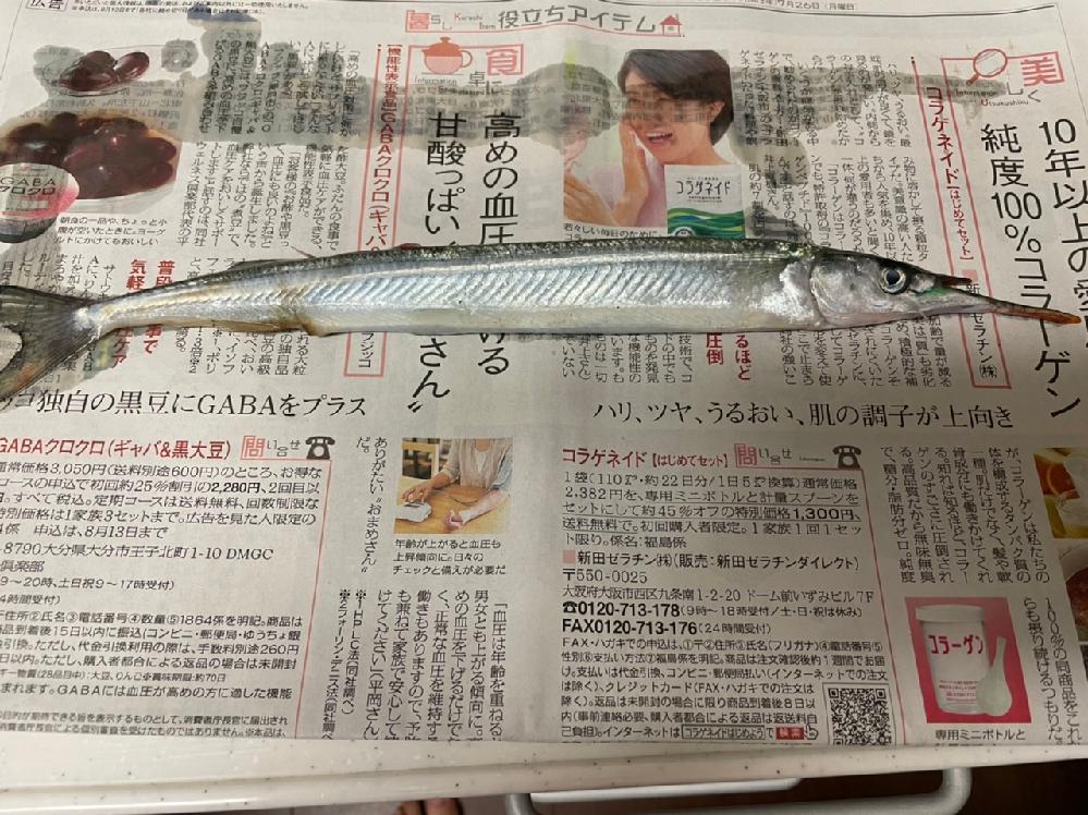 この魚は何ですか? 堤防で釣れました。