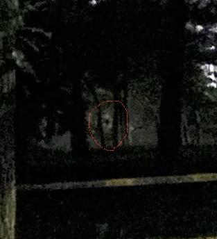 昨日森の中で写真を撮ってみたんですが、顔っぽいのが見えますか?心霊写真に見えませんか? 赤枠で囲ってます。