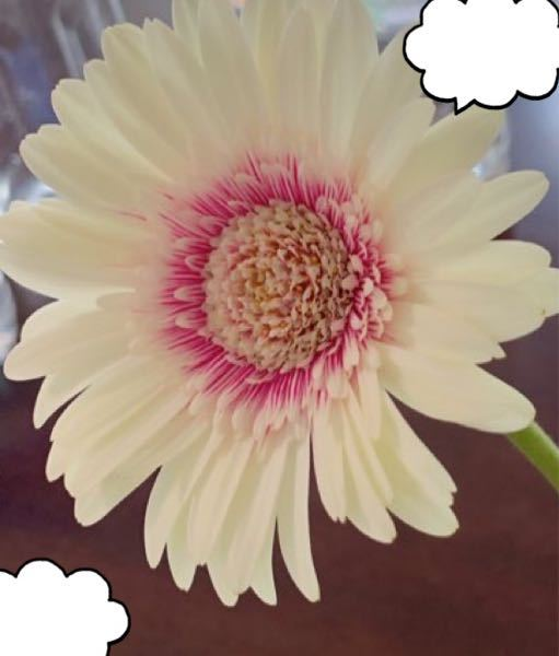 このお花はなんて言う名前の花ですか?