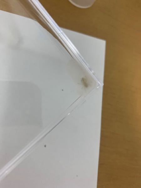 蜘蛛をそだててます!(部屋で捕まえた) 餌は蚊や、アリをあげてます! 2週間くらい飼ってます!!! 気付いたら蜘蛛の巣のような、蜘蛛の繭のようなものを つくって動かなくなりました。 ケースのはしっこにそれがつくられていて、出口は無いです! 蜘蛛の特徴は白くて、目が黒いです! 蜘蛛の種類と、なぜ動かないのか教えて欲しいです (死んでは無いです!ちゃんと生きてます)