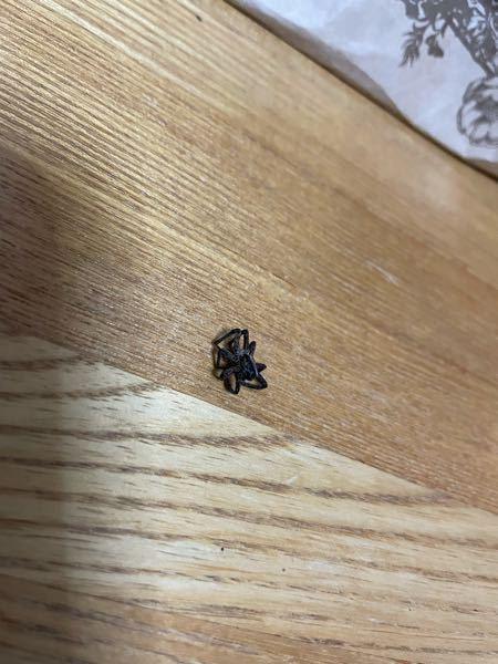 この蜘蛛?の名前を教えてください ♀️