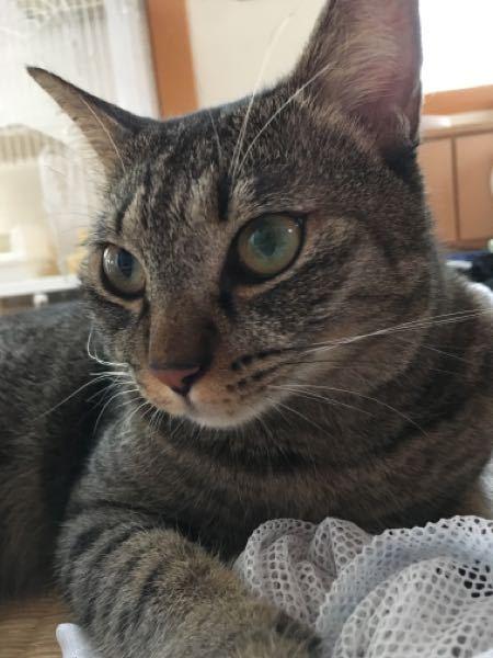 近所のおばあちゃんに飼い猫の写真を見せたら、汚い猫だね、何で飼おうと思ったの?と言われました。 腹が立つよりショックで…そうですか?可愛いんですよ、とだけ言い、気にしないようにしたんですが、家に帰ってから涙が出てきました。確かに野良だった子ですが… うちの猫、他人から見たら可愛く無いんでしょうか。私にとってはモチモチの可愛い可愛い子なんです。 誰か、可愛いと言ってください。