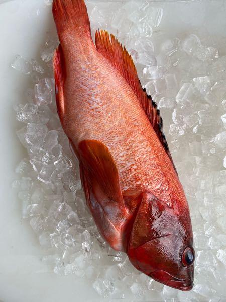 なんて言う魚ですか?