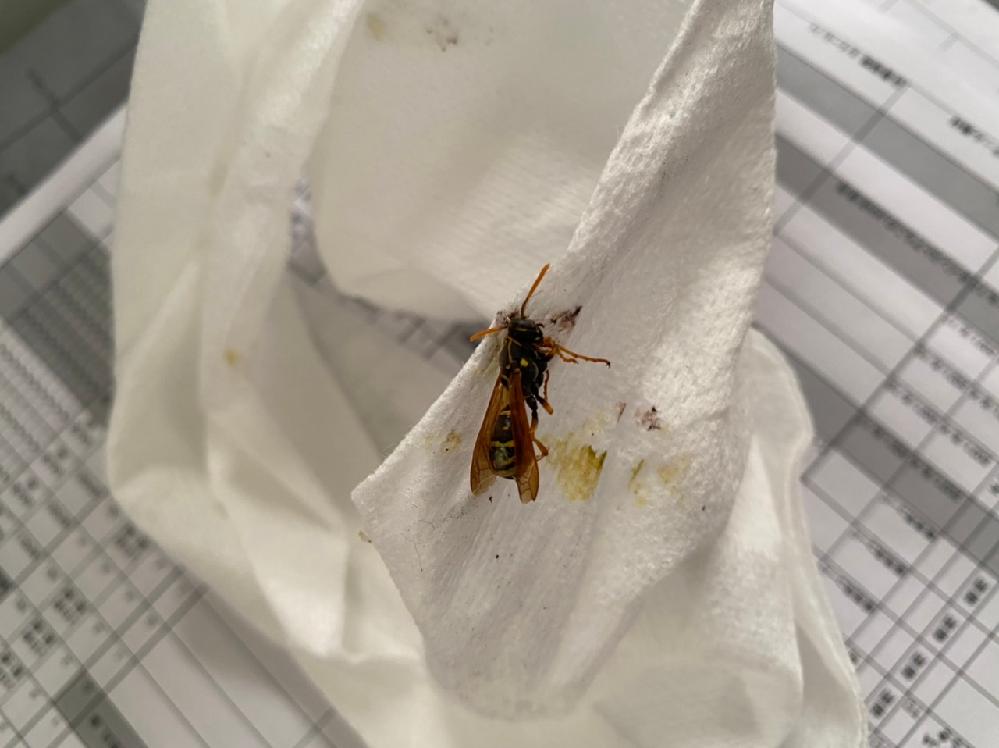 レタスにハチがついててハチに刺されました。 このハチは大丈夫ですか?