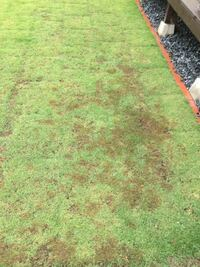 芝生が写真のように一部分茶色になっています。なにかの病気でしょうか?対策はあるのでしょうか?