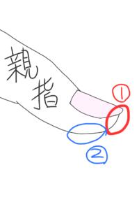 プロセカについて。 動画で爪の音をたてて録音している人がいるのですが、その人達って画像の①(赤)で叩いているのですか?もし①で叩いているとして、爪を鳴らすには指を80度ぐらいに曲げる必要がありません?そこまでして爪を鳴らす必要があるのでしょうか…? たまたま当たってるにしても、爪に負荷がかかりませんか?(たまたまでしたらすみません) ちなみに私は②(青)でやってます。音はあまり鳴りません...