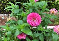 この花の名前は何ですか? 撮影日は2021年9月2日で撮影場所は兵庫県です。 よろしくお願いします。