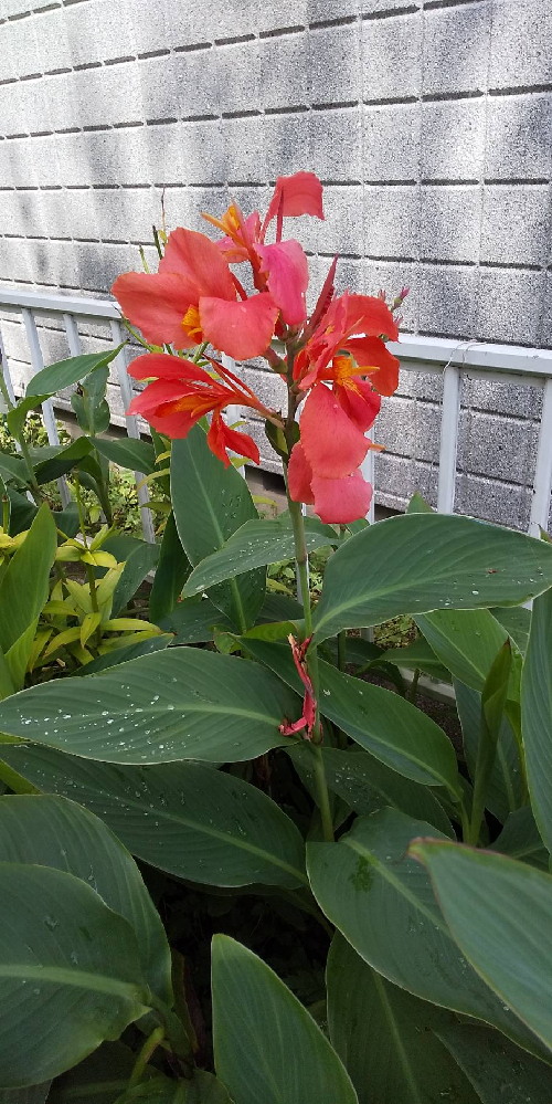 今時咲いているこの花は何という名前でしょうか?