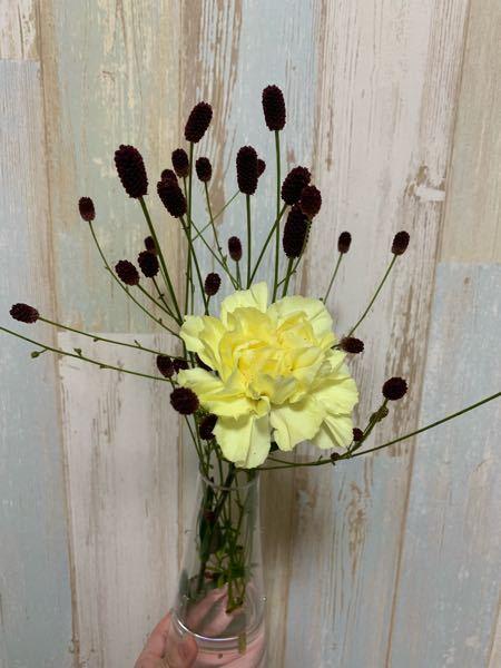 このお花の名前がわかる方いらっしゃいますか?すごく素敵なんですけど、名前忘れちゃって。詳しい方いらっしゃいますかね…