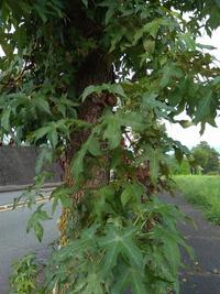 この木の名前を教えてください。 よろしくお願いいたします。